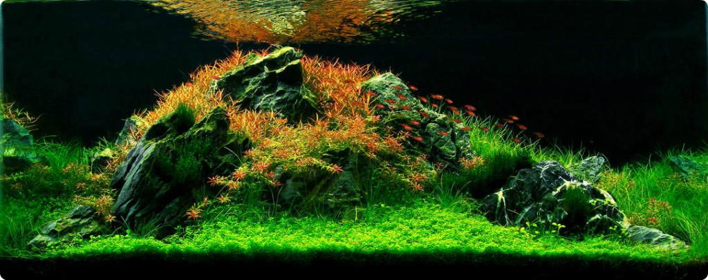 aquarium_6_km