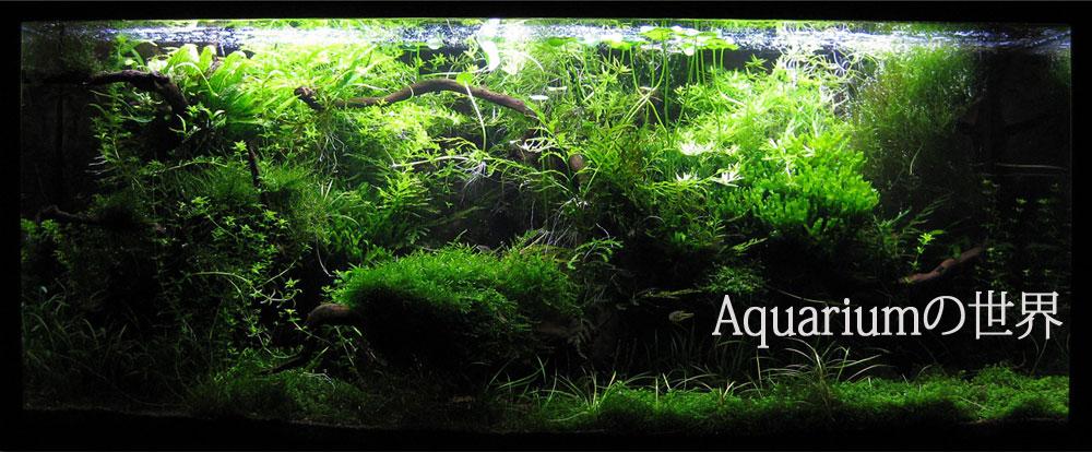 aquarium_top_r1