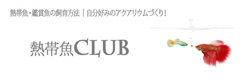 kotei_header