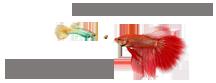 熱帯魚CLUB|理想の水槽を作るアクアリウム入門の成功手帳!
